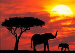 SUDAFRICA FEBBRAIO 2013