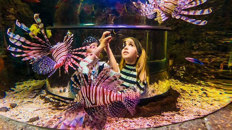 50 Jahre Kinder Sea Life Königswinter Sea Life Königswinter