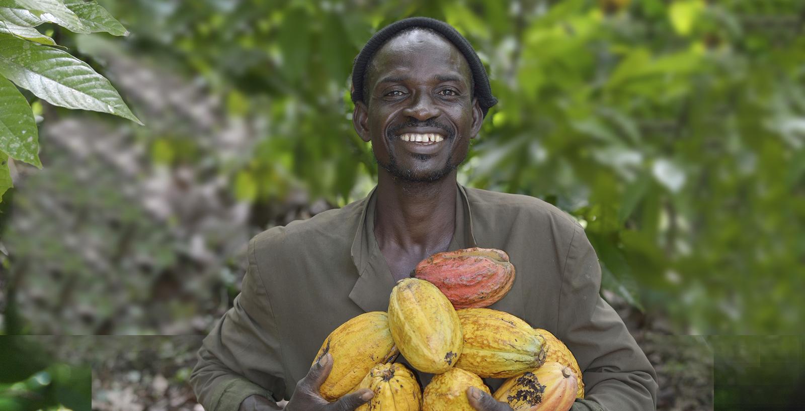 Raccoglitore del cacao.